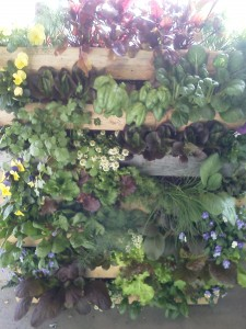 This is a greenwall, that is a great example of our NH Landscaping Services.